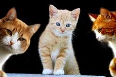 Nätt kattungar Arkivfoto