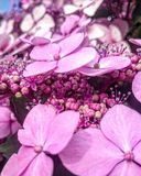 Nätt och rosa Royaltyfria Bilder