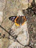 Nätt orange fjäril arkivfoto