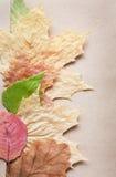 Nätt ordning av torkade leaves Arkivbild