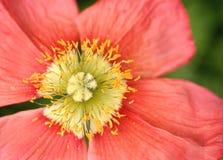 nätt pollen Arkivfoton