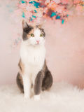 Nätt posera för katt Royaltyfri Foto