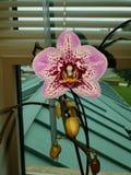 Nätt purpurfärgad orkidé royaltyfri foto