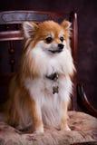 nätt sitting Royaltyfri Foto