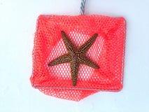 Nätt sjöstjärna Royaltyfri Bild