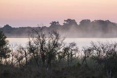 Nätt soluppgång över sjön till och med träd Arkivfoton
