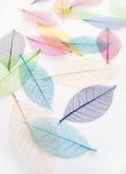 Nätt torkade färgrika leaves Arkivbild