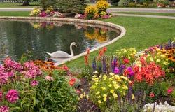 Nätt trädgård med pölen och svanen Royaltyfri Bild