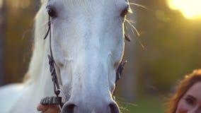 Nätt ung kvinna i röd klänning som smeker den behagfulla vita hästen på solnedgången Selet tystar ned hästen, man kvinna för hand lager videofilmer