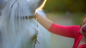 Nätt ung kvinna i röd klänning som smeker den behagfulla vita hästen på solnedgången Selet tystar ned hästen, man kvinna för hand stock video