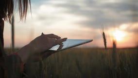 Nätt ung kvinna med minnestavladatorarbete i vetefält på solnedgången Flickan anv?nder en minnestavla, plan f?r att sk?rda arkivfilmer