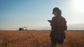 Nätt ung kvinna med minnestavladatorarbete i vetefält på solnedgången Flickan anv?nder en minnestavla, plan f?r att sk?rda lager videofilmer
