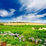 nätt vingård royaltyfri fotografi