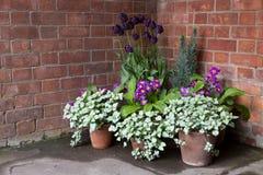 Nätta blommor i krukor i ett hörn Royaltyfria Foton