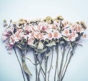 Nätta blommor på pastell slösar bakgrund, bästa sikt Blom- orientering arkivfoton