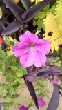 Nätta lösa blommor Arkivfoton
