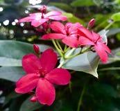 Nätta rosa blommor på zoo arkivbild