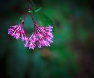 Nätta rosa färgblommor Royaltyfri Foto