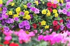 Nätta rosa färger, lilor och gulingblommor royaltyfri bild
