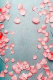 Nätta rosa pastellfärgade kronblad av blommor på lantlig bakgrund för turkos, lekmanna- lägenhet, bästa sikt arkivfoton