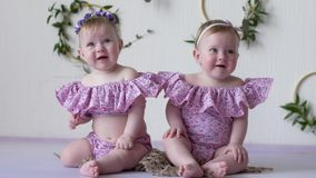 Nätta små systrar i rosa kläder som ler och poserar på photoshoot på bakgrund av väggen med dekorcloseupen arkivfilmer