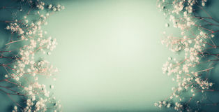 Nätta små vita Gypsophilablommor på turkos gör grön bakgrund, den nätta blom- ramen, bästa sikt Royaltyfri Bild