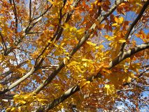 Nätta Tan Colored Leaves Arkivfoto