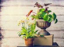 Nätta växter och orkidéblommor för inomhus arbeta i trädgården för behållare arkivbilder