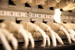 Nätverkskablar i datorhall Royaltyfri Foto