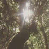 Nå en höjdpunkt bak träden Arkivbild