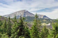 Nå en höjdpunkt i de Carpathian bergen med granar i förgrund Royaltyfri Bild