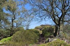 Nå maxima av Hardcastle Craggs, i den Hebden bron Arkivbild