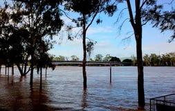 Nådde en höjdpunkt sikter 2011 för Rockhampton Fitzroy flod floder Arkivbild