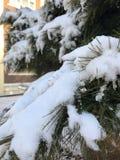 Någon snö på julgranen royaltyfria foton
