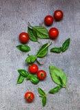 Någon tomater och basilika Fotografering för Bildbyråer
