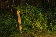 Någonstans i Shi män Forest Park arkivfoton