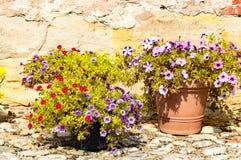 Något blommar i sommaren Arkivfoto
