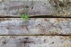 Något gräs som poppar från timmerstaketet Arkivbild