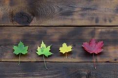 Några av de gulna stupade höstsidorna av olika färger på bakgrundsyttersidan av naturliga träbräden av mörk brunt c fotografering för bildbyråer