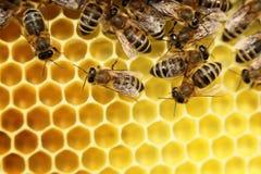 Några bin på en bivax royaltyfria bilder