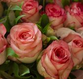 Några blommor i trädgården royaltyfria foton