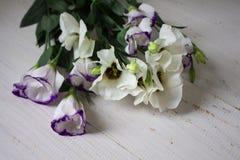 Några blommor i trädgården arkivfoto