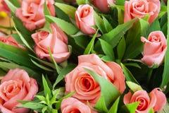 Några blommor i trädgården royaltyfria bilder