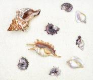 Några cockleshells är på vit sand Arkivfoto