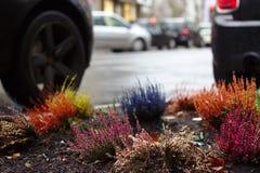 Några färger i staden med stads- arbeta i trädgården royaltyfri foto