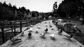 Några fåglar i lokal trädgård av Taiwan royaltyfri bild