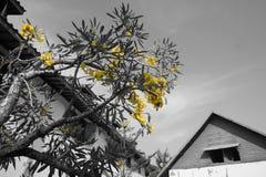 Några gulingblommor Arkivbilder