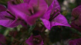 Några härliga blommor som blomstrar i trädgården i vår arkivfilmer