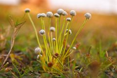 Några härliga mycket små blommor av gräs arkivfoto
