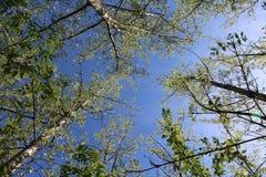 Några härliga trees Arkivbilder